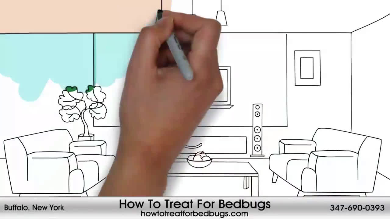 Bedbugs Service In Buffalo 347-690-0393