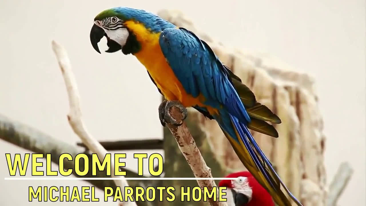 Available Fertile parrots eggs, ostrich and parrots for sale