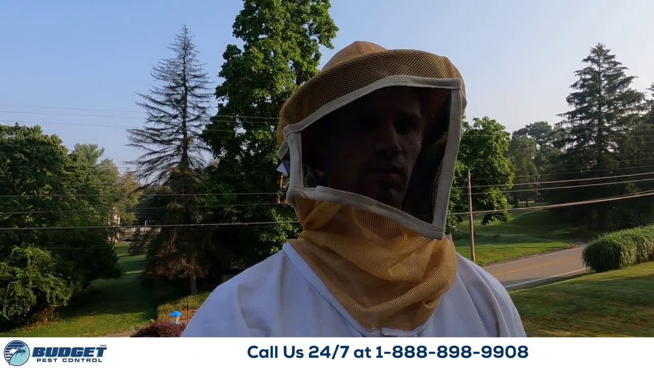 Stinging insect bee wasp hornet pest control exterminator services - Budget pest control services